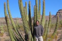 Organ Pipe Cactus / by Steve Garufi