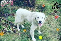 My dog Ody