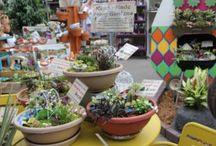 Miniature Gardening @ Garden Centers / Miniature gardening retail ideas from independent garden centers.