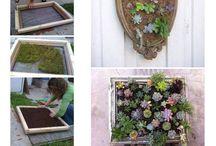Verticle gardening
