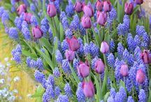 цветы на улице