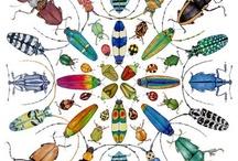 Besouros (beetles)
