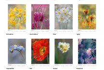 Kalender 2018 / Neue Foto Kalender zum Thema Blumen