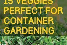 terace gardening