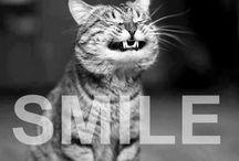 Humor Dental / Un poco de humor para disminuir el estrés del día.