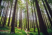 redwood grove esession