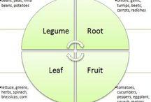 Kjøkkenhageideer / Garden, vegetables & growing food in boxes