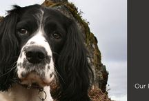 Pet Friendly Cottages / We have a superb collection of holiday homes that love your pet. Pick from either chic retreats for two, period houses, barn conversions or farmhouses. http://www.lakeland-cottage-company.co.uk/lake-district-cottages/pet_friendly_cottages/