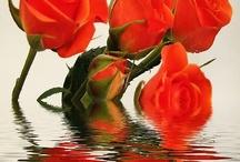 Flori pe apa