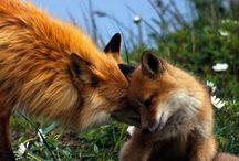 Belles créatures