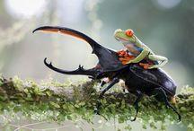 Animals riding Animals