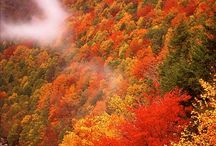 Foliage pictures