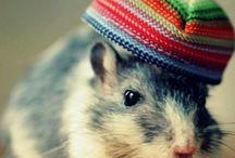muis/rat
