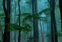 floresta pro Totoro