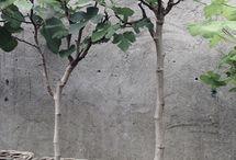 Beplantning i krukker