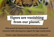 Pin it for Tigers / This is to help spread the beauty and majesty of my favorite all-time creature: the tiger.  This is also to spread the word about their dwindling numbers and the encourage others to help with their conservation, and the conservation of all big cats; most of which are all now threatened or endangered.  Please help save these wonderful animals! / by Kim Gonzales