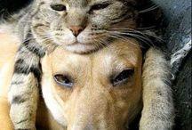 Pets (kitties & dogs) / by Ann Wetherbee