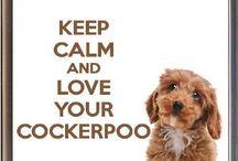 Cockerpoo