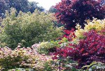 Jardin Zen-Jardin Japonais
