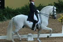 Horse Dressage / The world of competitive Dressage