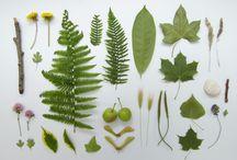 Make and Do: Nature