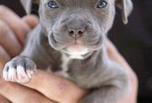 pupies