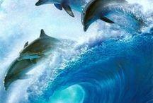 Dolphins & elephants
