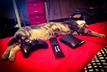 Gab et filou le chat
