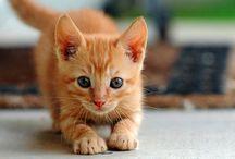 meow! <3