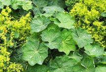 bylinky pro zdraví i krásu