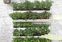 Quero aprender e fazer horta em pequeno espaço / Possibilidade de cultivar alimentos livres de agrotóxicos , aproveitar pequeno espaço e reciclados.