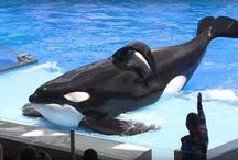 Valaat ja delfiinit kuuluvat mereen!