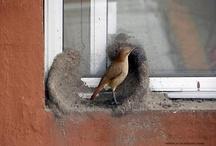 Birds Engineering Skills (Unbelievable)