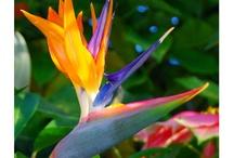 Tropical Flora & Fauna