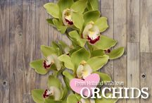 Love Orchids - Cymbidiums / Check out our range of stunning Love Cymbidiums! Check the availability in our webshop at www.holex.com or contact us at info@holex.com