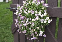 flowers on backyard fence