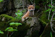 skogens djur
