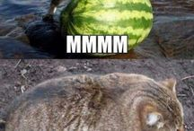 Witzige/süße Katzen