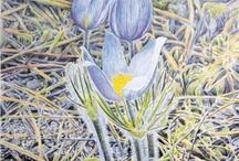 Jon Crane Fine Art Prints / Fine art prints by Watercolor Artist Jon Crane / by Lori Nonnast