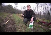 Make My Garden Grow / by Kimi Tran