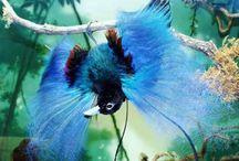 I love Birds / by Erika Cohen
