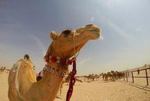 Qatar - Doha / by Una idea, un viaje