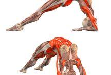 yoga y anatomia