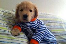 doggies & kittens :)
