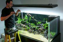 Tanked aquariums