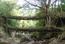 bridges / by Kerry Johnston