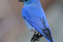 Birding - Idaho / by Michelle Durheim