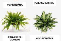 Planticas para casa