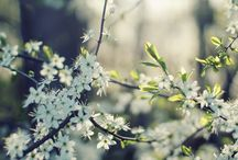 Season | Spring / Fresh, clean air; jonquils and bluebells and daisies; baby animals, energy and pastel colours...