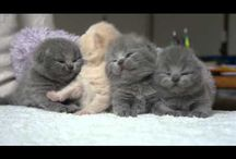 painfully cute kittens wake up
